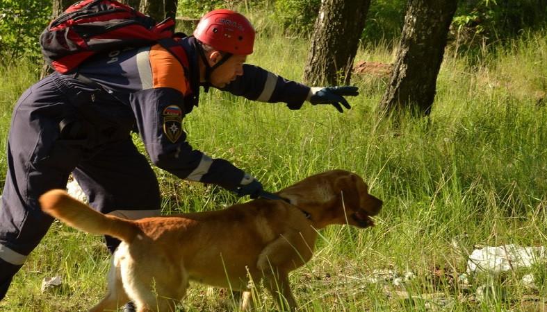 Домашних собак в Сортавале будут обучать поиску людей на местности