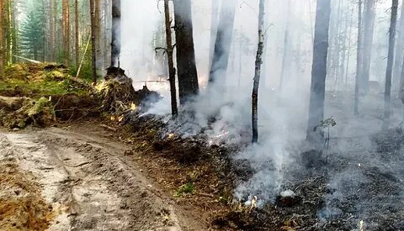 С сегодняшнего дня в Суоярвском районе – повышенная пожарная опасность