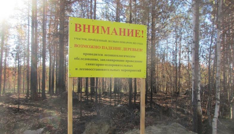 Не ходить в сгоревшие летом леса просит Минприроды Карелии